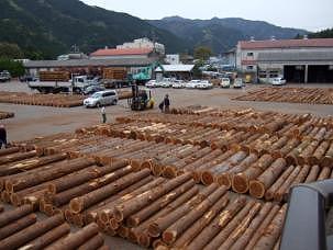 徳島の杉(木頭杉)/徳島の桧(木頭桧)