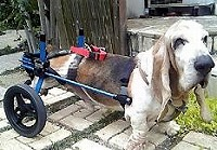 犬用車椅子のお友達